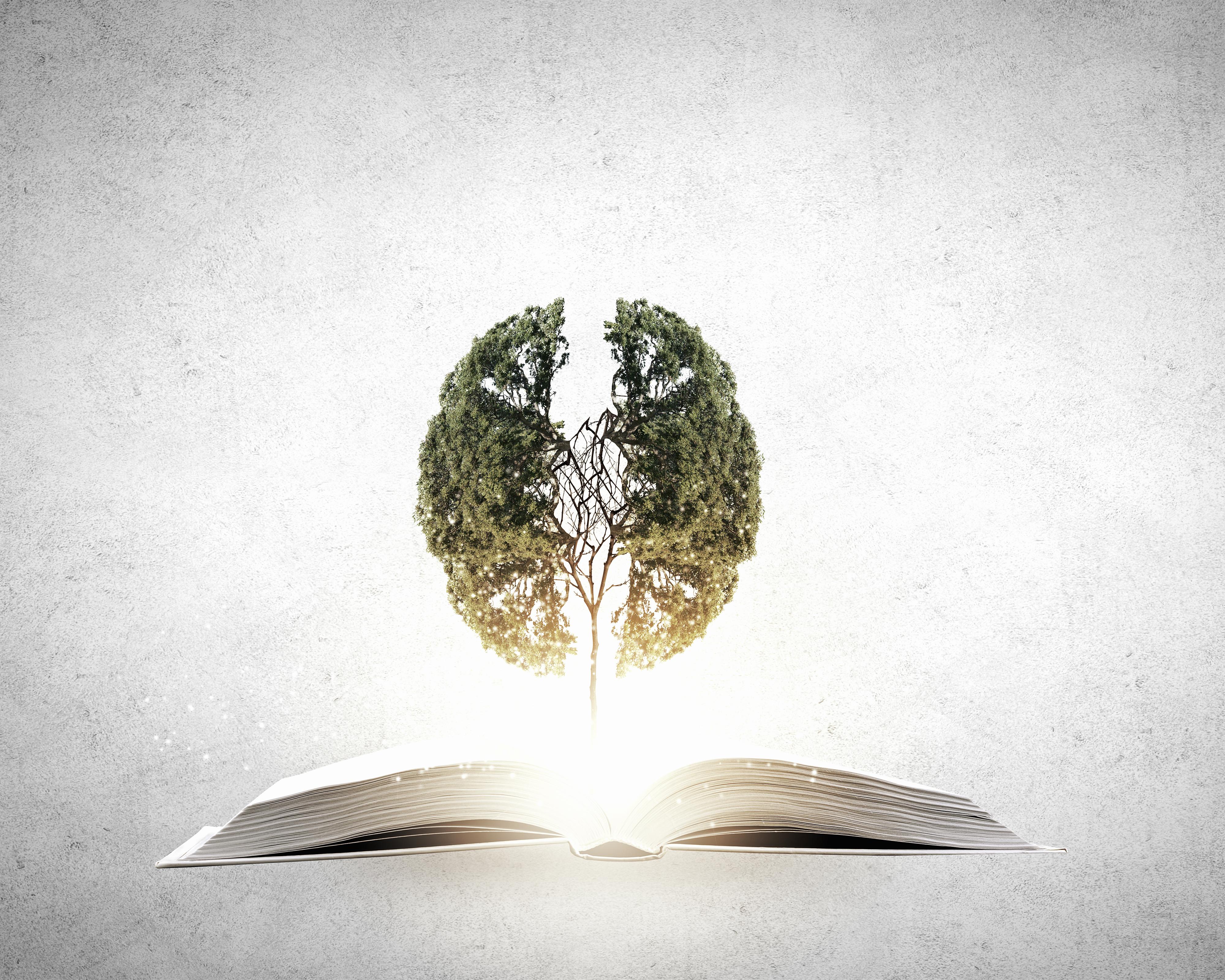 Hayal Gücünü Besleyen Kitaplar