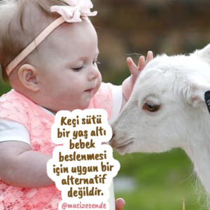Keçi sütü mü yoksa keçi inadı mı?