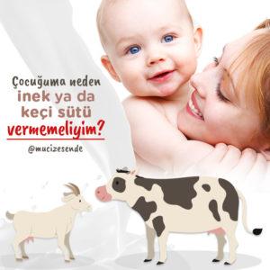 Çocuğuma Neden İnek ya da Keçi Sütü Vermemeliyim?